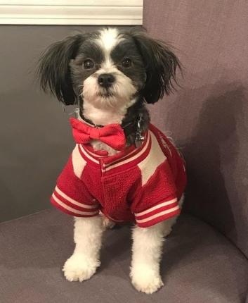 Dog Car Seat Tucker